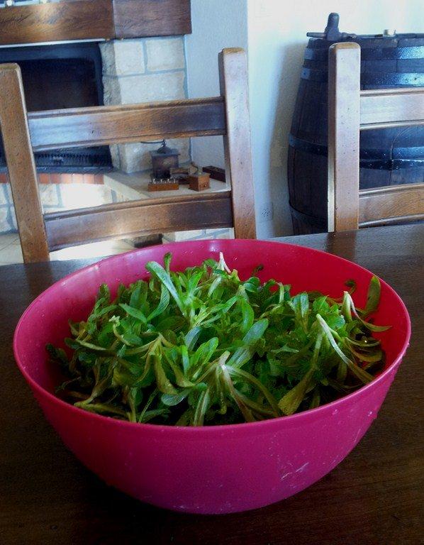 Récolte...même en hiver ! dans Travaux Doucette-1024x7682