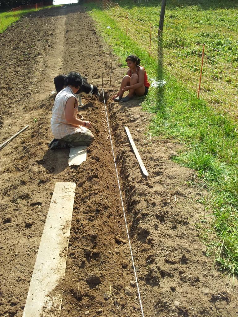 Plantation 2013 dans Travaux plantation-2013-2